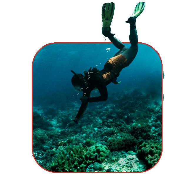 Image of Scuba Diver